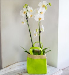 White Orchid Gift Bag