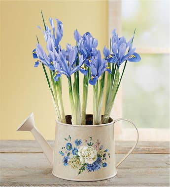 Iris Meadow Blooms Watering Can
