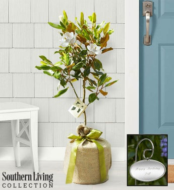 Magnolia Tree by Southern Living