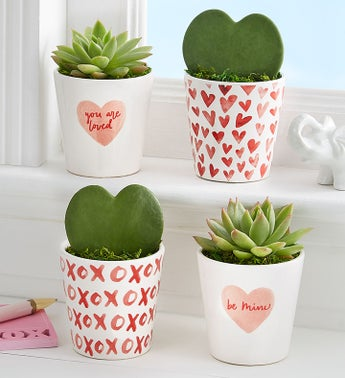 Hoya Hearts and Succulents