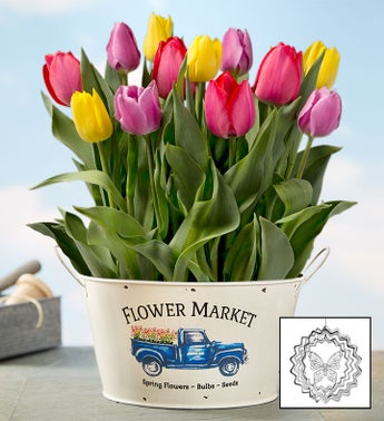 Farm Fresh Tulip Bulbs + Free Suncatcher