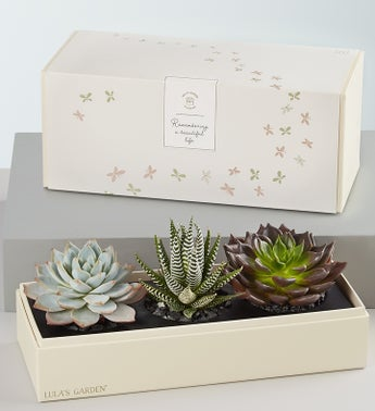 Lulas In Loving Memory Succulents
