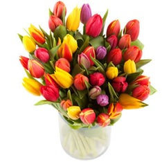 Mixed Carnaval tulips